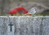 Graveside Vigil