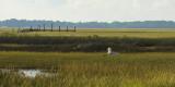 Wood storks in the marsh