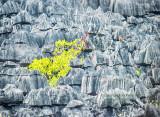 Grey Tsingy