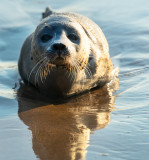 Washed-up Seal Pup