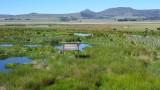 Wakkerstroom Wetland Reserve