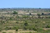 Kruger view