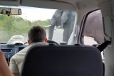 Kruger elephant crossing