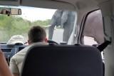 Kruger elephant crossing