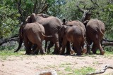 Elephants leave the water hole