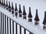 Fence 01260636