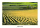 Ireland  - Co.Louth - Fields near Ardee