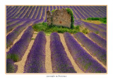 France - Provence - An old barn wall in a lavender field