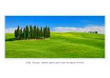Italy - Tuscany - Famous cypress grove near San Quirico D'Orcia j