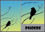 Recent Bird Images