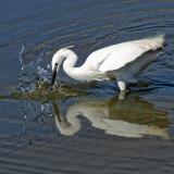 Egret show