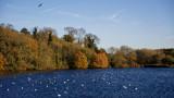 Loompit Lake - autumn