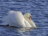 Swan seeing off contender