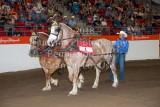 Heavy Horse Pull