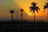 Warm glow of rising sun