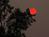 Days of The Red Sun and Moon