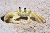 Mini crab !