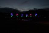 Glow in the Night