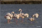 Fauna Costa Blanca