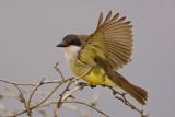 Nevada Rare Birds