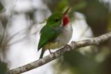 Puerto Rico birding 2017