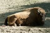 A Nyíregyházi Állatpark - Sóstó Zoo