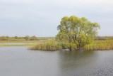Pripyat river reka_MG_3836-111.jpg