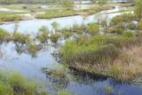 Pripyat marshes mokrišče_MG_3804-111.jpg