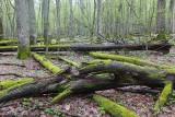Białowieża Forest Biełavježskaja pušča Beloveška pušča_IMG_4163-111.jpg