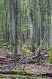 Białowieża Forest Biełavježskaja pušča Beloveška pušča_IMG_4169-111.jpg