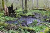 Białowieża Forest Biełavježskaja pušča Beloveška pušča_IMG_4237-111.jpg