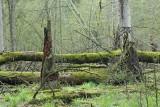 Białowieża Forest Biełavježskaja pušča Beloveška pušča_MG_4190-111.jpg