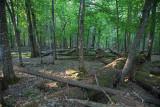 Białowieża Forest Biełavježskaja pušča Beloveška pušča_MG_9818-111.jpg