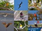 335 US birds from A to Z