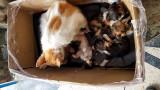 Essaouira Vous aimez les chatons