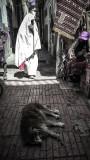 166006920.rj9IyzOB.Essaouira_medina_01_pb.jpg