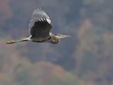 Lake-Heron.jpg