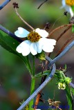 FLOWERS,  INSECTS  AND MORE