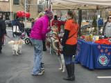 Mutt-i-grees rescue dog fair (1)