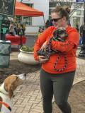 Mutt-i-grees rescue dog fair (2)