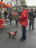 Mutt-i-grees rescue dog fair (4)