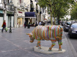 The striped cow
