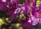 I actually photographed a bee ;-)