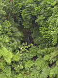 Waterfall, Iriomote Island