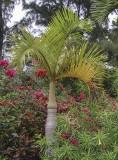Botanical garden, Yufu Island