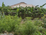 Subtropical yard, Taketomi Island