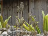 Coral garden, Taketomi Island