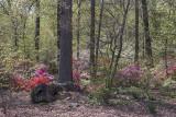 Azalea forest