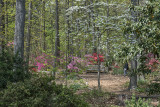 Place to relax among dogwoods and azaleas
