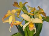 Delicately yellow